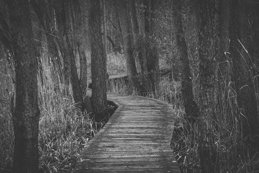Pexel Trail