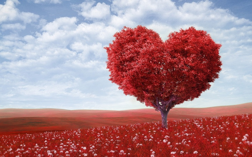 heart tree pexels-photo-207962