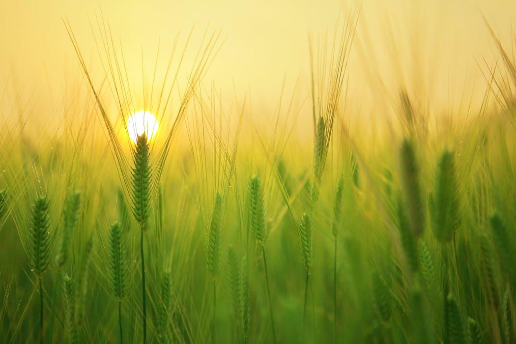 Sunrise pexels-photo-207247